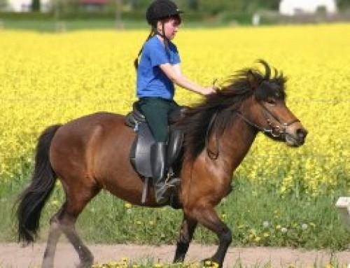"""""""Bewegte Logopädie"""" und die Sprachförderung mit Hilfe von Pferden"""